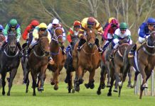 Condensed timetables boost sports betting at TAB NZ